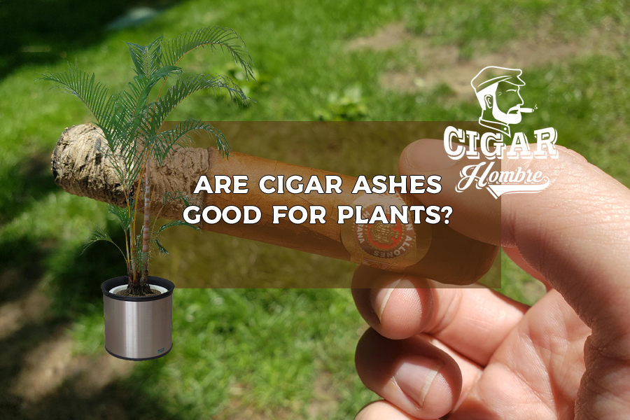 are cigar ashes good for plants